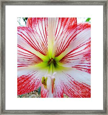 Lily Wow Framed Print