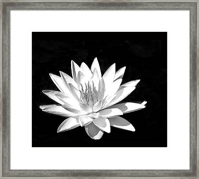 Lily#2 Framed Print by Joe Bledsoe