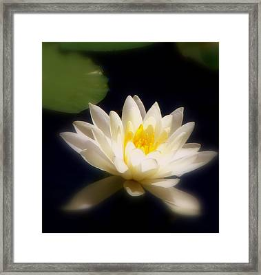 Lilypad Framed Print by Maria Scarfone