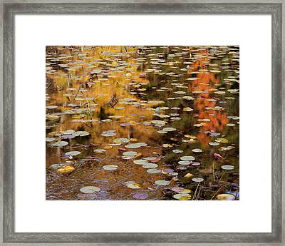 Lilypads And Reflection-h Framed Print
