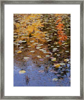 Lilypads And Reflection Framed Print