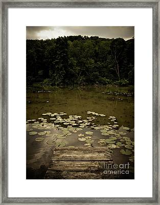 Lilypads At The Dock Framed Print by Amy Cicconi