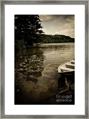 Lilypads In The Lake Framed Print by Amy Cicconi