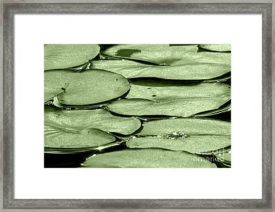 Framed Print featuring the photograph Lilypads by Roselynne Broussard
