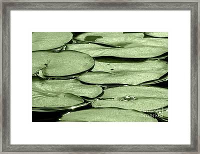 Lilypads Framed Print