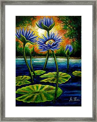 Lilys And Lotus Framed Print by Sebastian Pierre