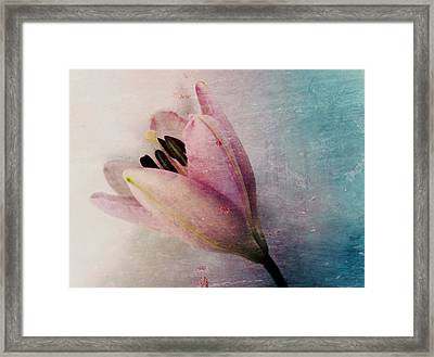 Lily's Dream Framed Print by Marianna Mills