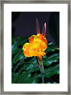 Lily's Ears Framed Print by Paul Anderson