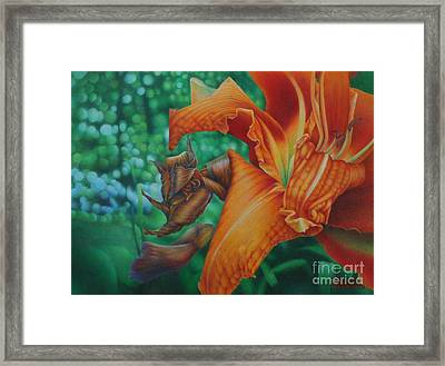 Lily's Evening Framed Print by Pamela Clements