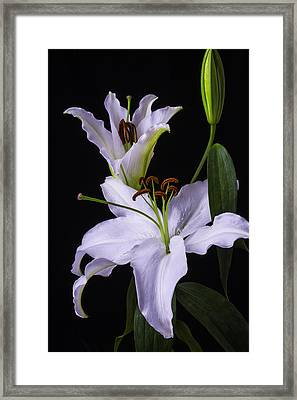 Lily's In Bloom Framed Print by Garry Gay