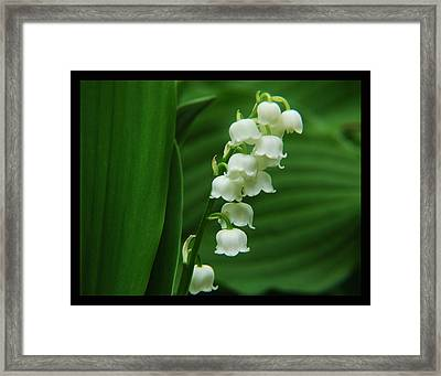 Lilyvalley Framed Print
