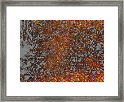 Limbinosity Framed Print by Jo-Anne Gazo-McKim