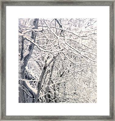 Limbs Covered With Snow Framed Print