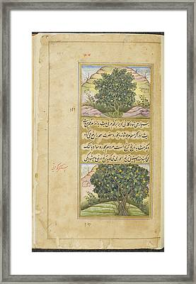 Lime And Bitter Orange Framed Print by British Library