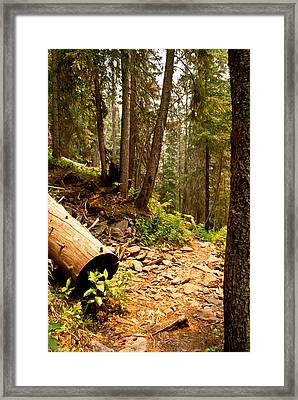 Lime Creek Trail Framed Print by Jessica Tookey