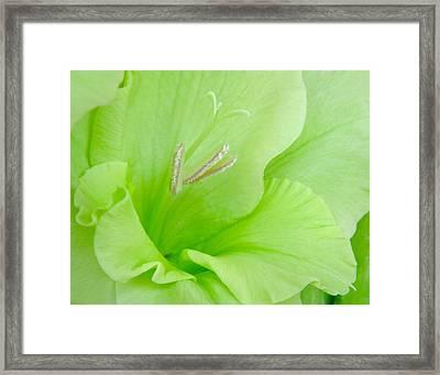 Lime Sherbet Framed Print by David and Carol Kelly