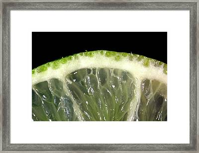 Lime Slice Framed Print by Thomas Fester