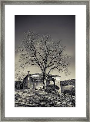 Lime Tree Framed Print by Tony Priestley