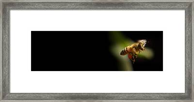 Limelight.. Framed Print by Al  Swasey