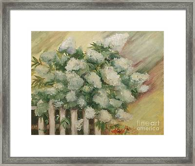 Limelight Hydrangea Framed Print by Marge Casey