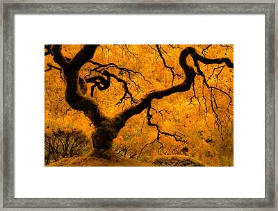 Limned In Light Framed Print