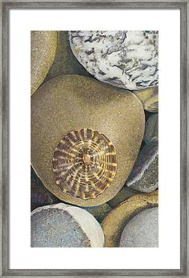 Limpet Shell Framed Print
