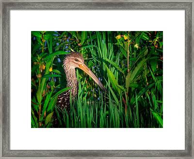Limpkin At Sunrise Framed Print by Mark Andrew Thomas