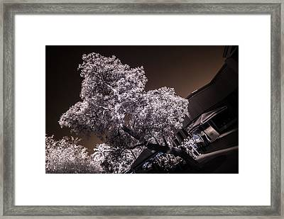 Lincoln Road Tree Framed Print