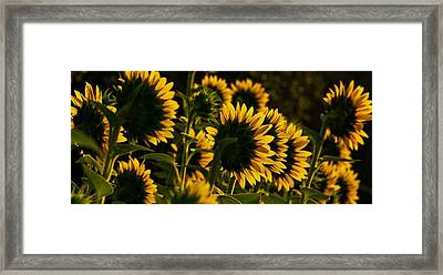 Line Dancing  Framed Print