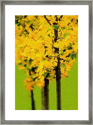 Line Of Maple Trees In Autumn Framed Print
