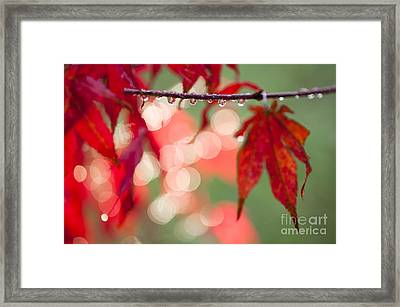 Line Of Reflections Framed Print by Anne Gilbert