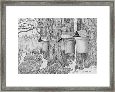 Line Of Sap Buckets Framed Print