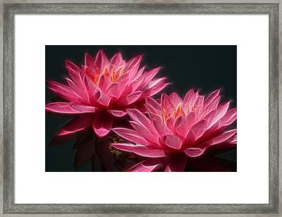 Lined Pink Water Lilies Framed Print by Linda Phelps