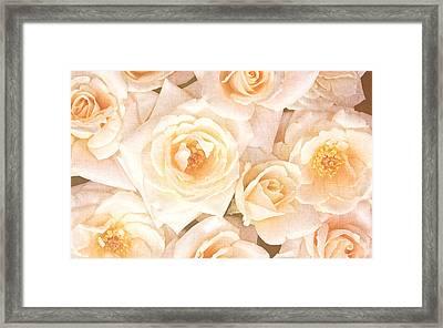 Linen Roses Framed Print