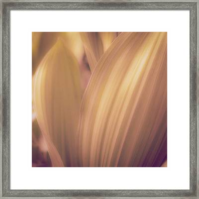Lines And Curves Framed Print by Joseph Smith