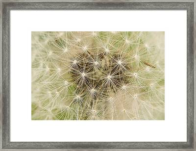 Lines And Patterns Framed Print