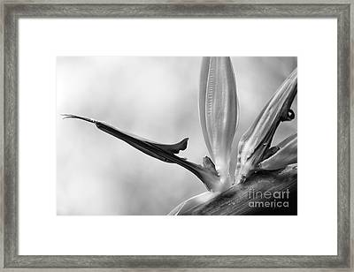 Lines Curves And Angles Framed Print
