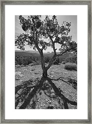 Framed Print featuring the photograph Lines In Two Light by James Steele