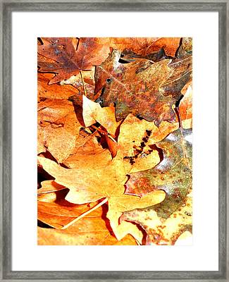 Lines Of Fall Framed Print