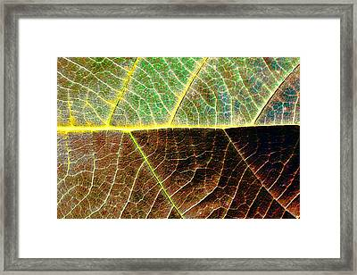 Lines Of Life Framed Print by Dave Bosse