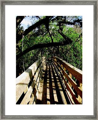Lines Of Shade Framed Print by Will Boutin Photos
