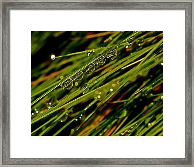 Lineup Framed Print by Rona Black