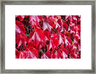 Linne Color Framed Print