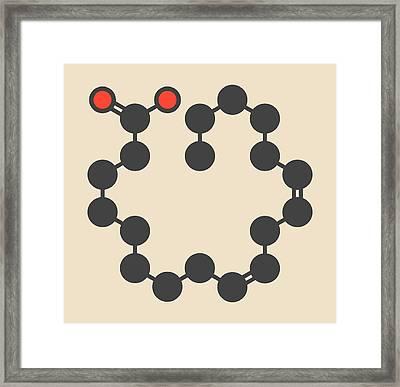Linoleic Acid Molecule Framed Print by Molekuul