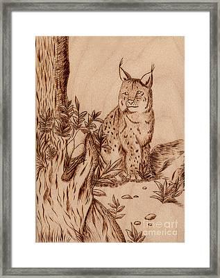 Linx Framed Print by Jeanette K