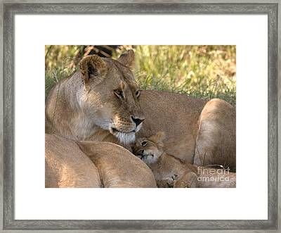 Framed Print featuring the photograph Lion And Cub by Chris Scroggins