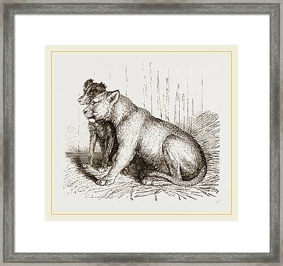 Lion And Spaniel Framed Print