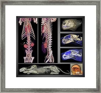 Lion Framed Print by Anders Persson, Cmiv