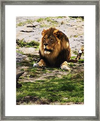 Framed Print featuring the photograph Lion At Rest by B Wayne Mullins