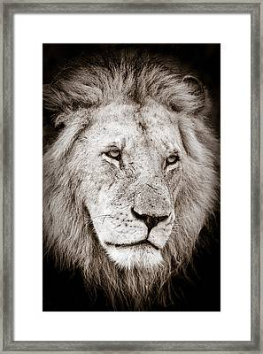 Lion Cameo Framed Print